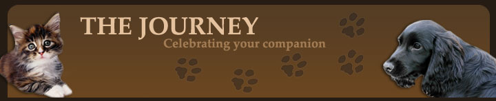The Journey - Celebrating Your Companion - Crystal Kent